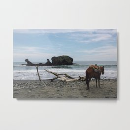 Lead a horse to water Metal Print