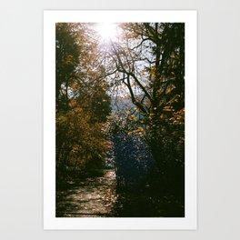 Cleared Path Art Print