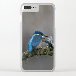 Kingfisher on a Branch Clear iPhone Case
