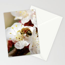 Bee Visiting an Apricot Blossom 1 Stationery Cards