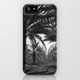 Date palms. Coachella Valley, California iPhone Case