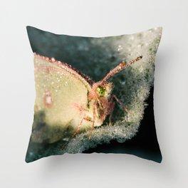 Dewey Butterfly Throw Pillow