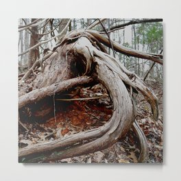 twisted roots, color photo Metal Print