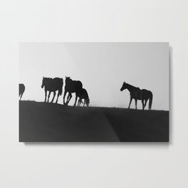 Horse Cantering with Bird Metal Print