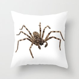 Wolf spider lycosa sp Throw Pillow