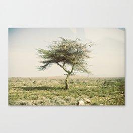 twist::kenya Canvas Print
