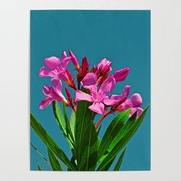 Pretty in pink under turquoise sky Poster