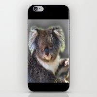 koala iPhone & iPod Skins featuring Koala by SwanniePhotoArt