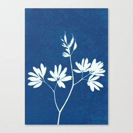 Blue botanical cyanotype wildflower print Canvas Print
