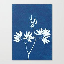 Blue botanical cyanotype wildflower print Canvas Print