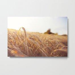 Golden field Metal Print