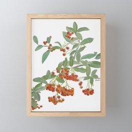 Fall orange berries - scarlet firethorn bush watercolor Framed Mini Art Print