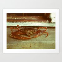 crab Art Prints featuring Crab by Thomas Loewen