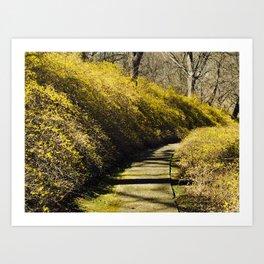 Forsythia filled walkway Art Print