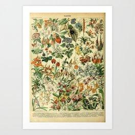Adolphe Millot- Fleurs Illustration Art Print