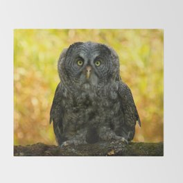 Owl Staring Contest Throw Blanket