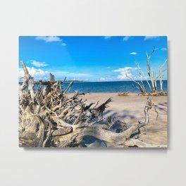 Big Talbot Island State Park Florida Metal Print
