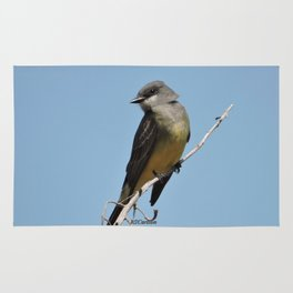 A Cassin's Kingbird Scopes the Skies for Flies Rug