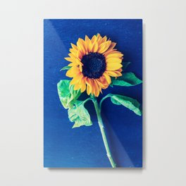 A decorative sunflower on the blue background Metal Print