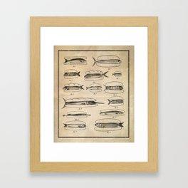 Fishers' menu Framed Art Print