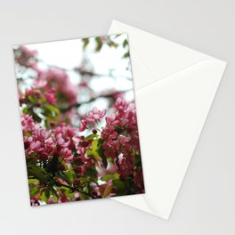 Pink Blossoms #01 Stationery Cards