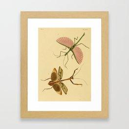 Naturalist Stick Bugs Framed Art Print