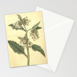 Flower 1912 symphytum orientale Eastern Comfrey10 Stationery Cards
