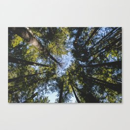 Vancouver Tree Tops Canvas Print