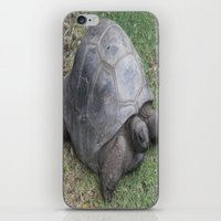 tortoise iPhone & iPod Skins featuring tortoise by shannon's art space