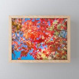 Autumn foliage at Kinkaku-ji Zen Garden in Kyoto. Framed Mini Art Print