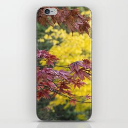 Maple Contrasts iPhone Skin