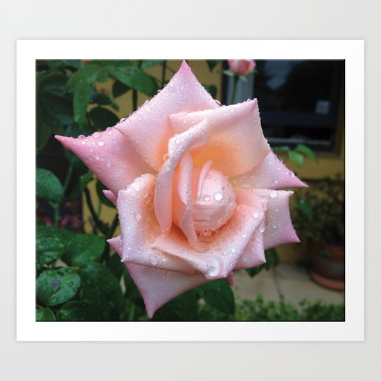 Rose after the Rain Art Print
