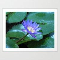 Blue waterlily Art Print