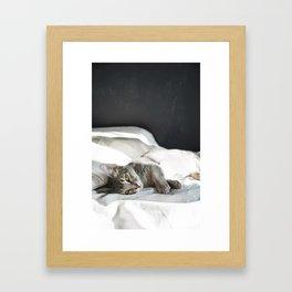 cat3 Framed Art Print