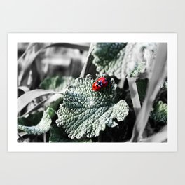 Lady Bugs Caught In Action Art Print