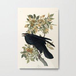 Audubon plate - Raven (Corvux corax) Metal Print