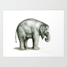 Baby Elephant (2) g008 Art Print