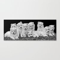 puppies Canvas Prints featuring Samoyed Puppies by Sharon J