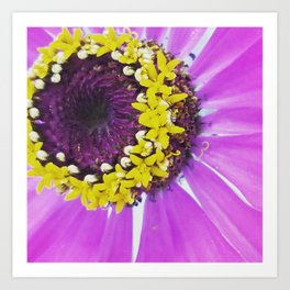 Brightest center Zinnia Art Print