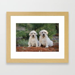 Yellow Labradors Framed Art Print
