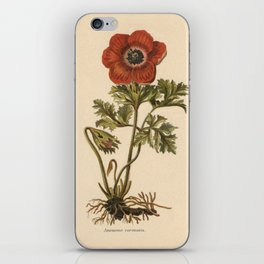 1800s Encyclopedia Lithograph of Anemone Flower iPhone Skin