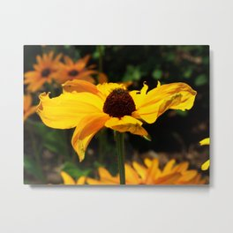 Black-eyed Susan Metal Print