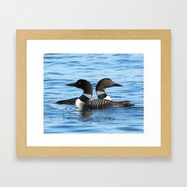 Loon love Framed Art Print