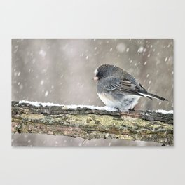 Once Upon a Snow Bird: Junco Canvas Print