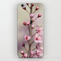 cherry blossom iPhone & iPod Skins featuring Cherry Blossom by Zen and Chic
