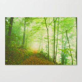 Along the undiscovered path  ( calm green lush forest) Canvas Print