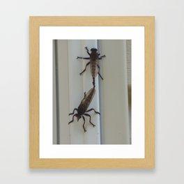 robber flies in love I Framed Art Print