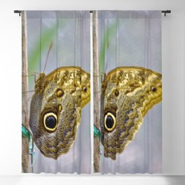 Blue Morpho Blackout Curtain