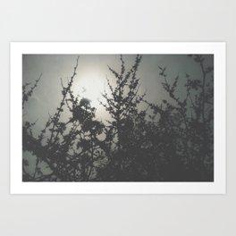 Through the Grey Art Print