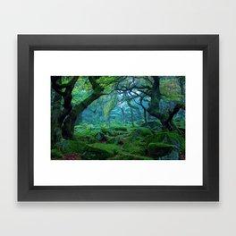 Enchanted forest mood Framed Art Print